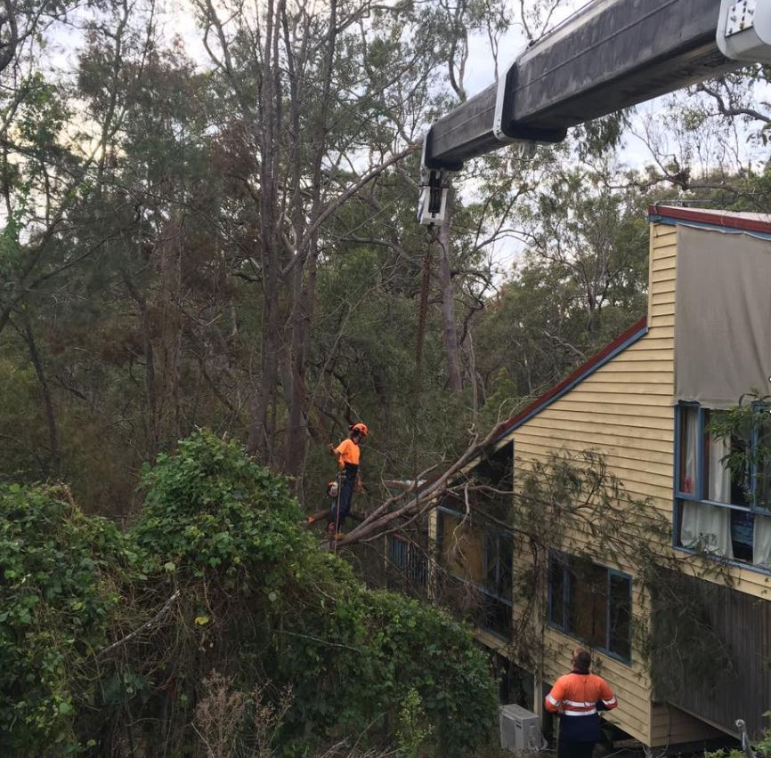 Emergency tree removal Gold Coast