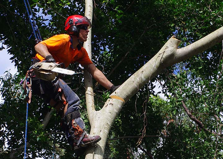 tree pruning gold coast