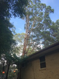 storm season, tree pruning