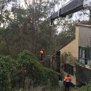 emergency tree services nerang