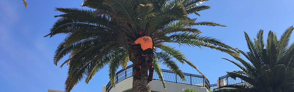 Palm Tree Removal Gold Coast