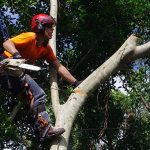 What Does An Arborist Do? (We Are Hiring!!)