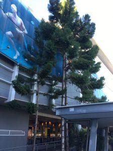 tree reports gold coast