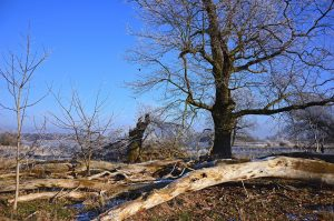 The 7 Signs of a Dying Tree