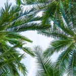 6 Common Types Of Palm Trees in Queensland