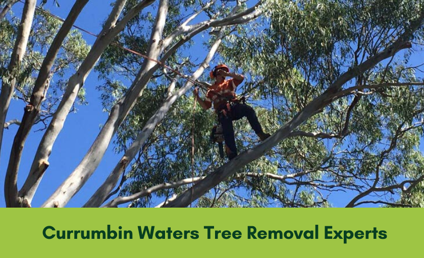 Tree removal Currumbin Waters Banner
