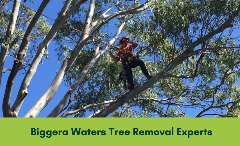 Tree Removal Biggera Waters Banner