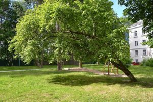 6 Signs Your Tree May Be About To Fall