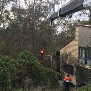 tree removal highland park